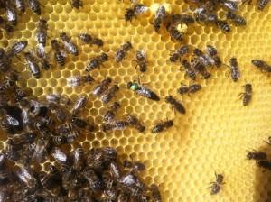 včely-3-z-51